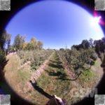 Tamaggo Panoramic 360LiveCam Egg Review